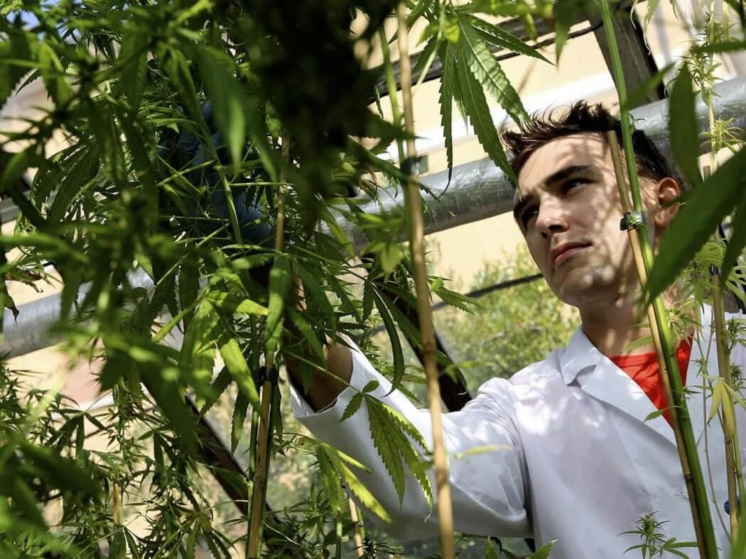 Medical Marijuana in Italy